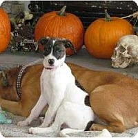 Adopt A Pet :: Rex - Fort Hunter, NY