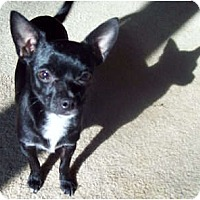 Adopt A Pet :: MeMe - Southport, NC