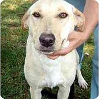 Adopt A Pet :: Star Y - Cumming, GA
