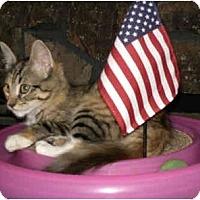 Adopt A Pet :: Rio - Modesto, CA
