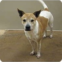 Adopt A Pet :: Roscoe - Arlington, TX