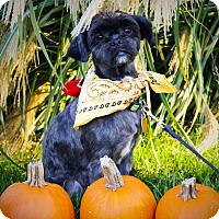 Adopt A Pet :: Black Jack - Princeton, KY