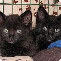 Adopt A Pet :: Posey - Portland, OR