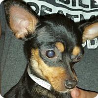 Adopt A Pet :: ASH - Houston, TX