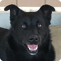 Adopt A Pet :: Angela - Canoga Park, CA