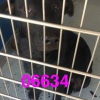 Adopt A Pet :: LULU - Kiln, MS