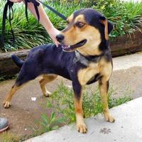 Adopt A Pet :: Lynx - 041702k - Tupelo, MS