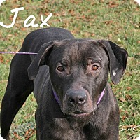 Adopt A Pet :: Jax - Pleasantville, NJ