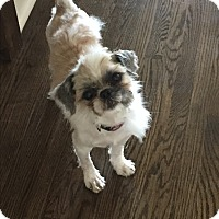 Adopt A Pet :: FRANK - Mississauga, ON
