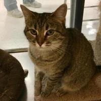 Adopt A Pet :: Penny - Ashland, VA