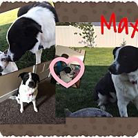 Adopt A Pet :: Max - Jerome, ID