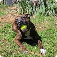 Adopt A Pet :: Coco - Albany, NH