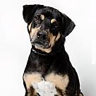 Adopt A Pet :: Kylo