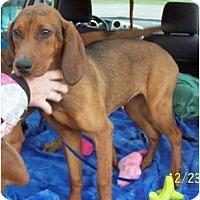Adopt A Pet :: Brianna - Dallas, TX