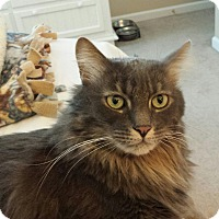 Adopt A Pet :: Smokey - Troy, OH