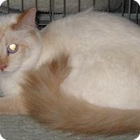 Adopt A Pet :: Dolly - Dallas, TX