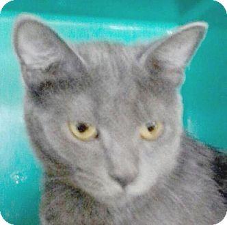 Domestic Shorthair Cat for adoption in Maquoketa, Iowa - Emily