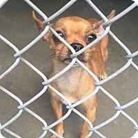 Adopt A Pet :: Sandy Beach - Bloomfield, CT