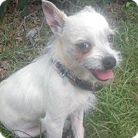 Adopt A Pet :: Tinker - Lebanon, CT