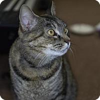 Adopt A Pet :: Ripley - Harrisonburg, VA