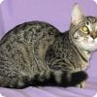 Adopt A Pet :: Holly - Powell, OH