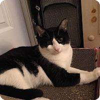 Adopt A Pet :: Sylvester - Fredericksburg, VA