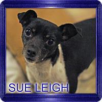 Adopt A Pet :: SUE LEIGH - Port Clinton, OH