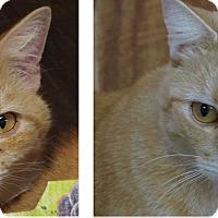 Adopt A Pet :: Sammi & Theo - Unionville, PA