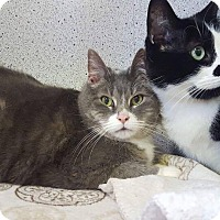 Adopt A Pet :: BREAD - THORNHILL, ON