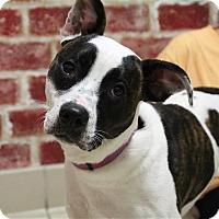 Adopt A Pet :: Lexi - Elyria, OH