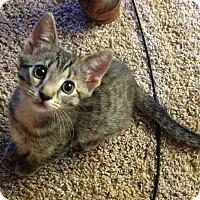 Adopt A Pet :: Spanky - Alamo, CA