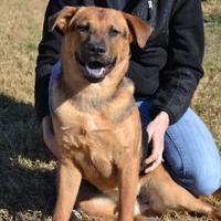 Adopt A Pet :: BRUSTER - troutman, NC