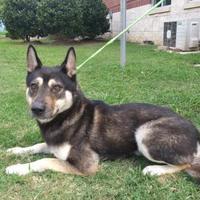 Adopt A Pet :: Ridley - Cedar Hill, TX