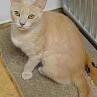 Adopt A Pet :: Kanga171151 - Atlanta, GA