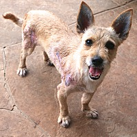Adopt A Pet :: Holly Sunshine - Woonsocket, RI