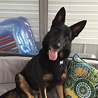 Adopt A Pet :: Princess - Green Cove Springs, FL