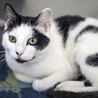 Adopt A Pet :: Jenna - 27716 - Petaluma, CA