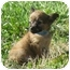 Photo 1 - Spaniel (Unknown Type) Mix Puppy for adoption in Fairmount, Georgia - Sleepy