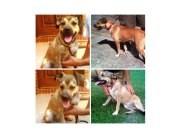 Shepherd (Unknown Type) Mix Puppy for adoption in Alpharetta, Georgia - Annie