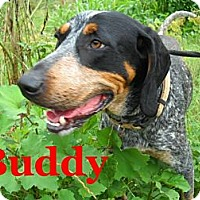 Adopt A Pet :: Buddy - Harrisburgh, PA