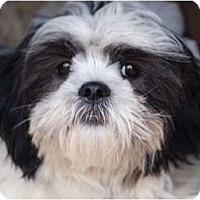 Adopt A Pet :: Bandit - Toronto/Etobicoke/GTA, ON