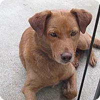 Adopt A Pet :: Isabella - Conyers, GA