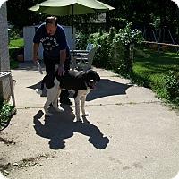 Adopt A Pet :: Tashi - West Bloomfield, MI