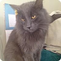 Adopt A Pet :: Solomon - Orillia, ON