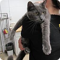 Adopt A Pet :: Apollo - Athens, GA