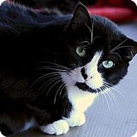 Adopt A Pet :: Smudge - $10 - House Spirit - Brimfield, MA