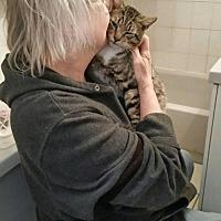 Adopt A Pet :: Rudy (FIV) - Rockaway, NJ