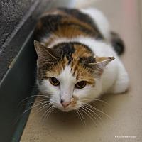 Adopt A Pet :: M'Lynn - Tucson, AZ