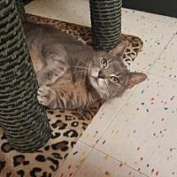 Adopt A Pet :: Tupper - Rochester, NY