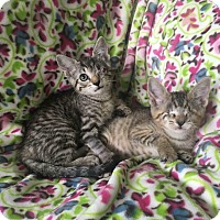 Adopt A Pet :: Valerie - Zolfo Springs, FL